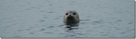 Seal_DSC_0026