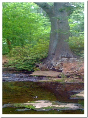 Tree Stream